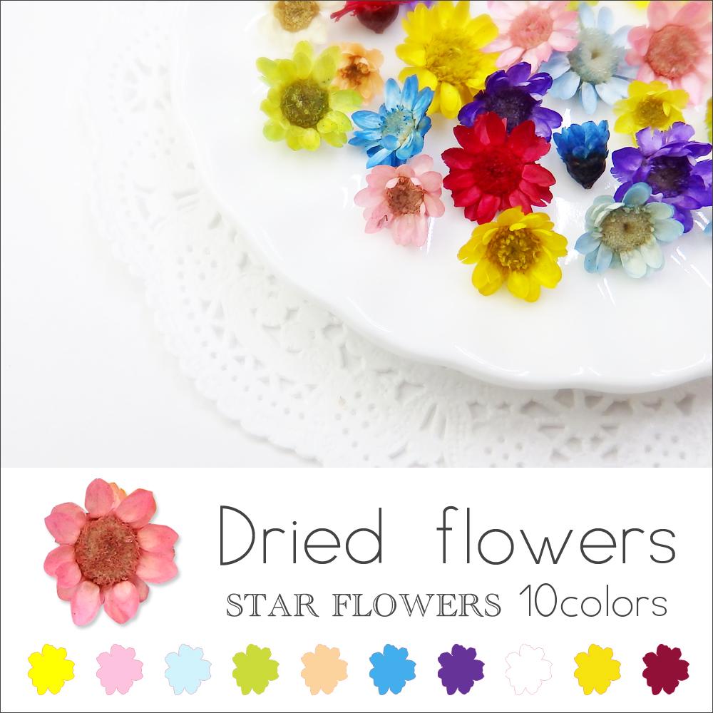 ネイル・ハンドメイド スターフラワー ガラスドームに【生花を使用したドライフラワー10色】約10個入り